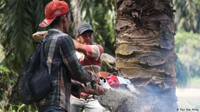 Regenwaldschützer mit Motorsäge - Der Regenwald ruft SOS