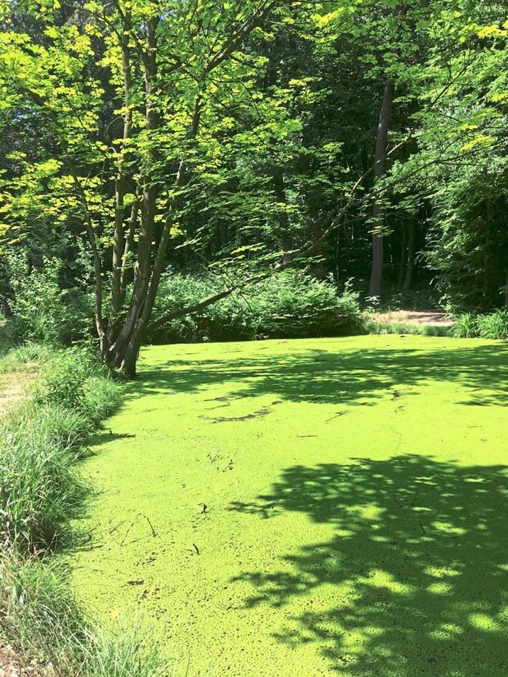 Die Farbe Grün