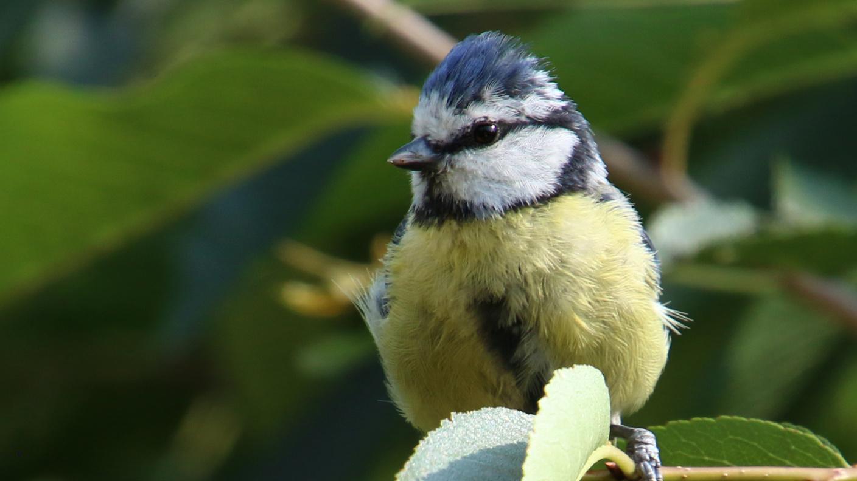 Vögel Kommen Mit Dem Klimawandel Nicht Zurecht