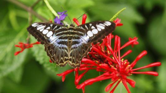 Insektensterben - Der Artenschutz soll offiziell erfasst werden (Magazin)