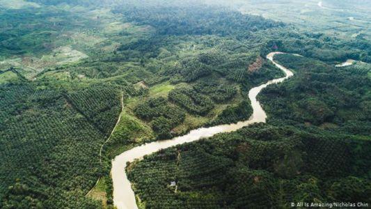 Notruf der Natur -Der Regenwald ruft SOS
