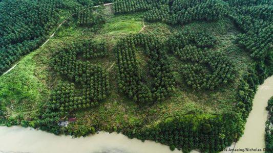 Landschaftskunst auf 20 Hektar - Der Regenwald ruft SOS