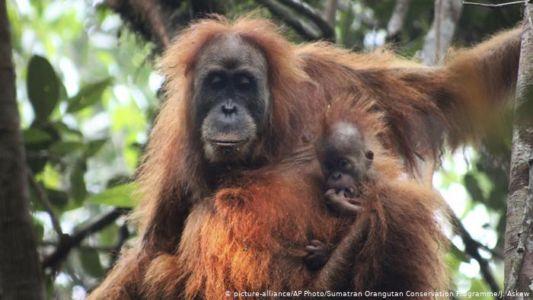 Dringender Aufruf zur Rettung bedrohter Tiere - Der Regenwald ruft SOS