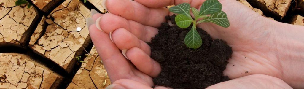 Shutterstock 51967687-dry-soil-plant-hands